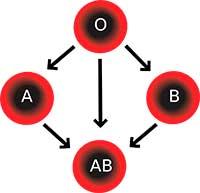 Таблица питания по группе крови